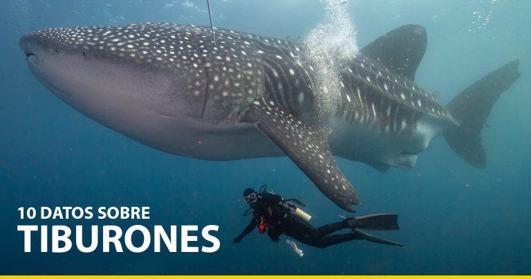 10 datos sobre tiburones que deberías conocer