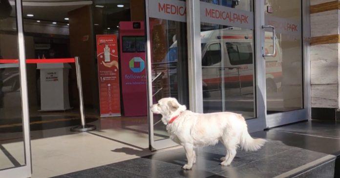 Perro se queda afuera del hospital