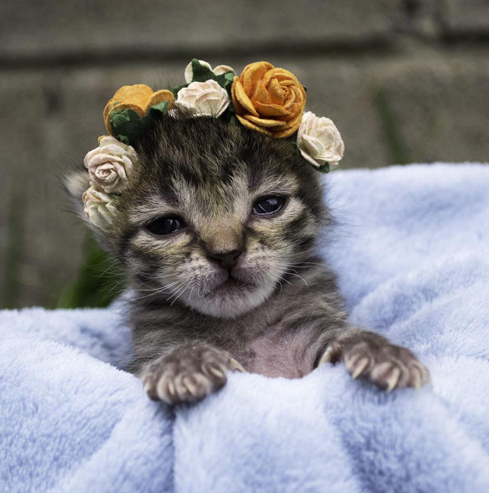 Adorable Flora