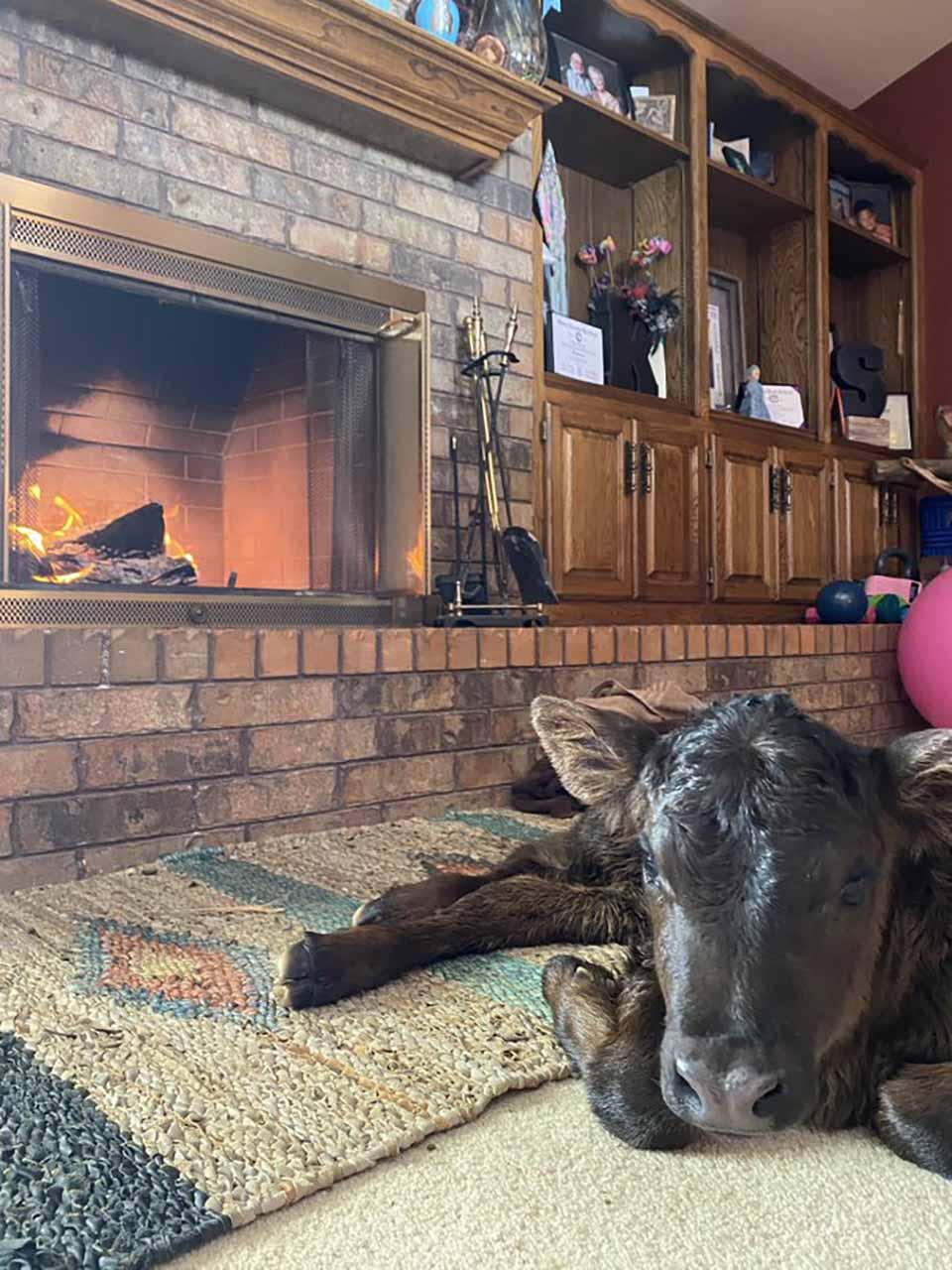 Animales en casa debido a la ola de frío