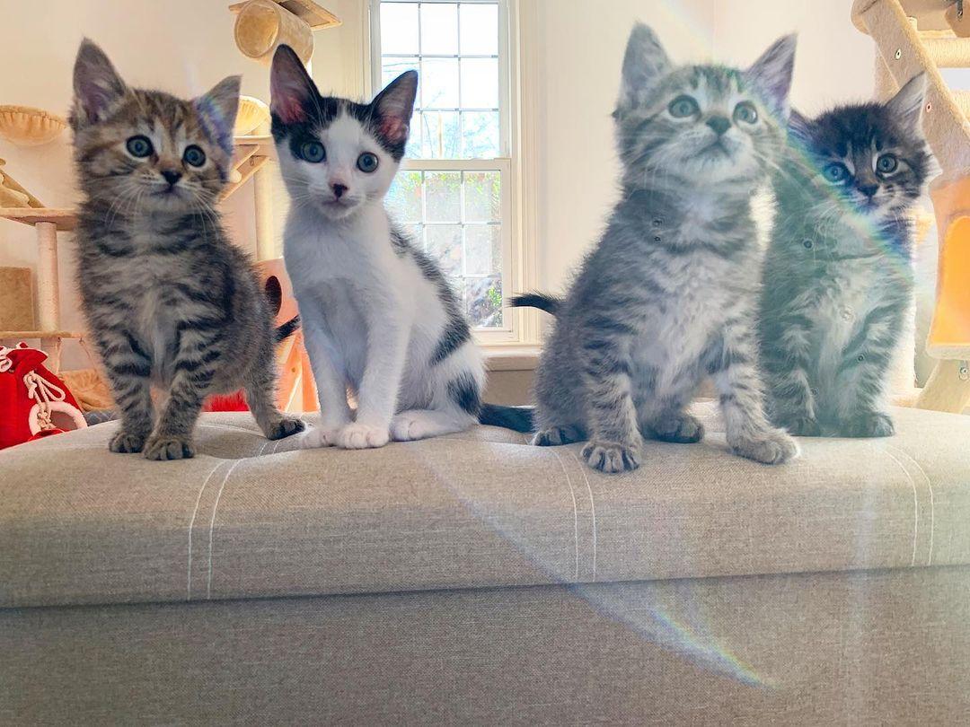 Cuatro lindos gatitos