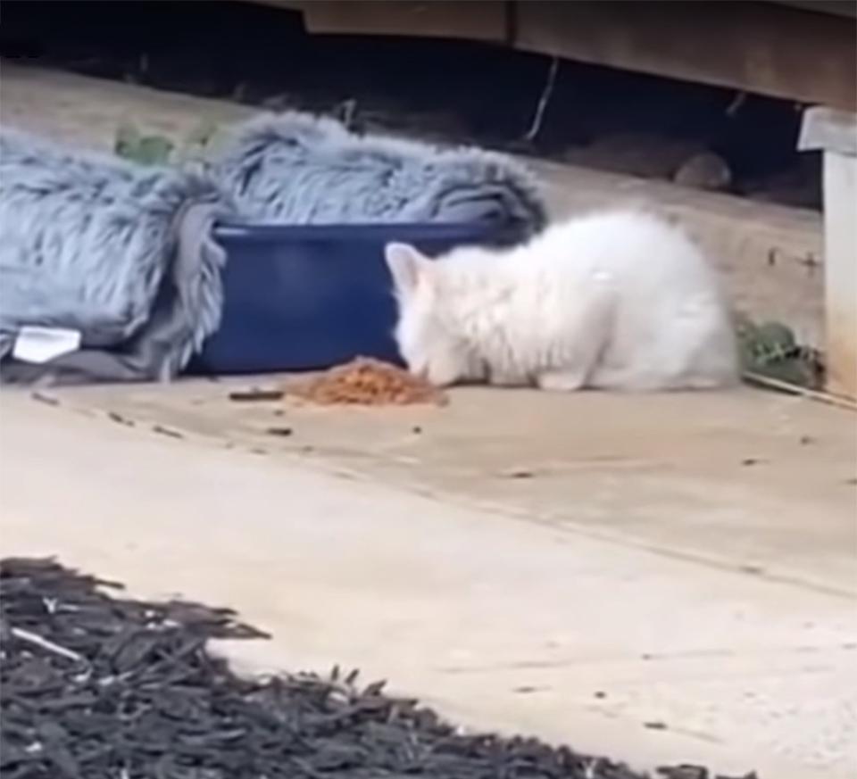 Gatita en el patio