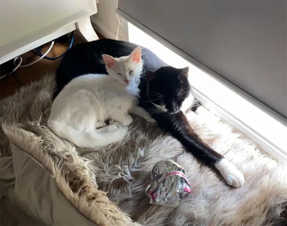 Gatita sigue un gato