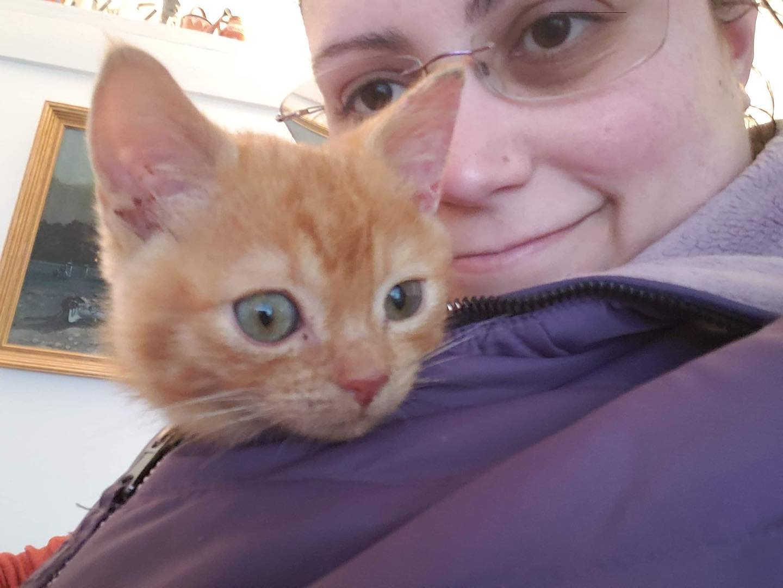 Gatito adoptado