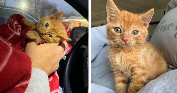 Gatito con la cabeza inclinada superó todos los obstáculos y ahora tiene el hogar de sus sueños