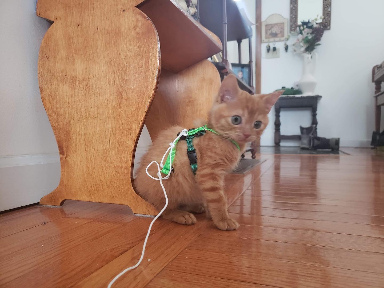 Gatito juguetón