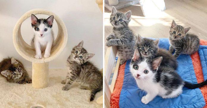 Gatitos rescatados amigos gatito necesitaba amigo