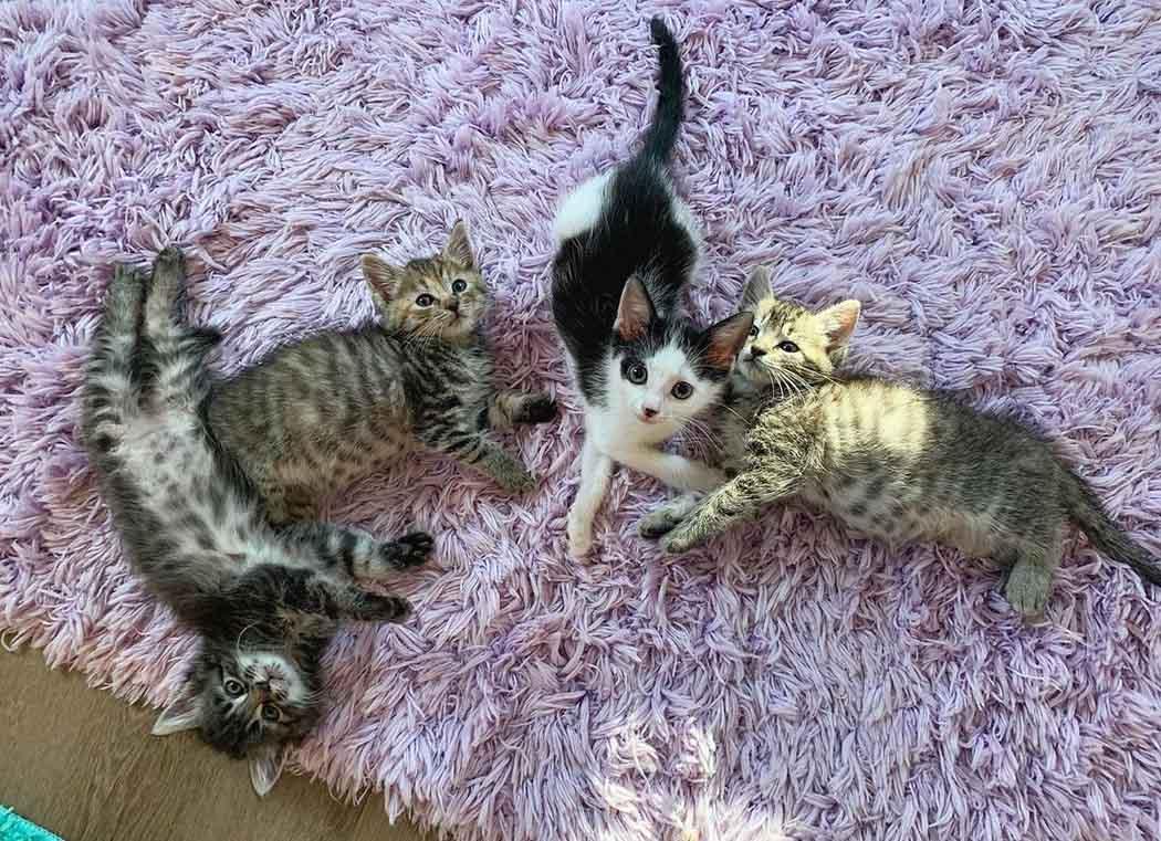 Gatitos rescatados se hicieron amigos de gatito solitario