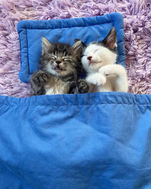 Gatos toman una siesta