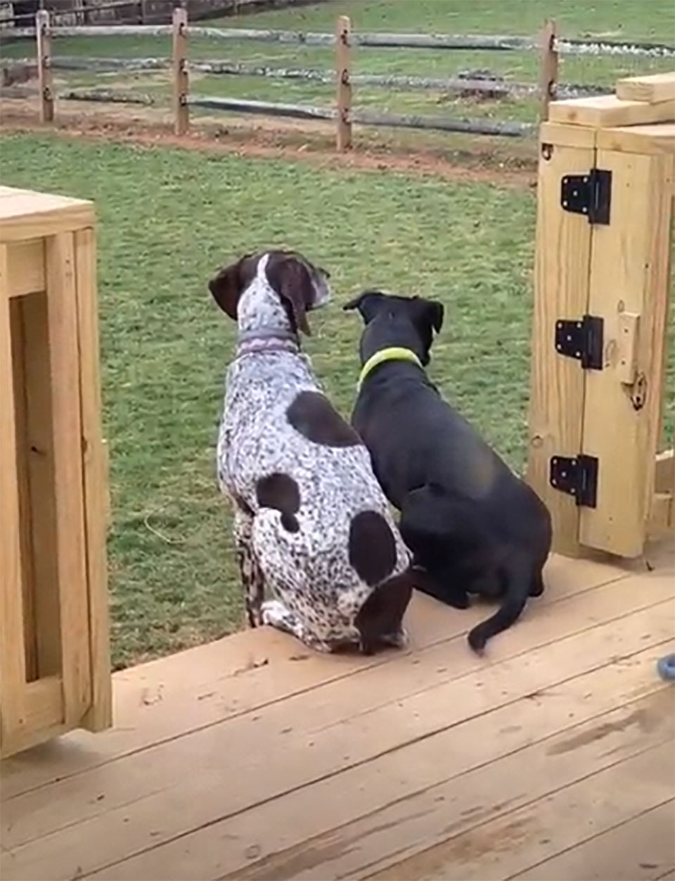 Hermanos en el patio