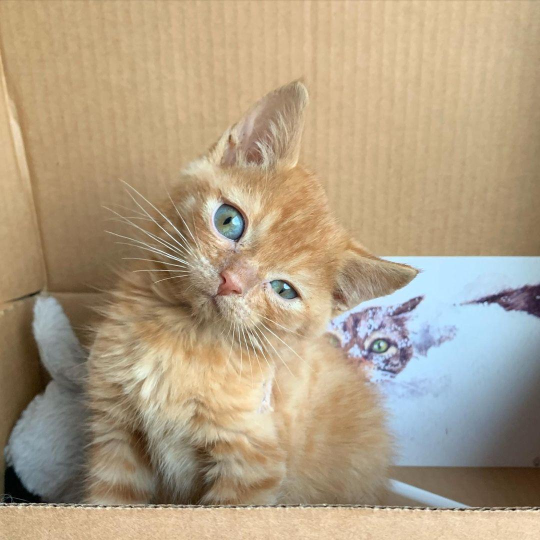 Hermoso gatito con la cabeza inclinada