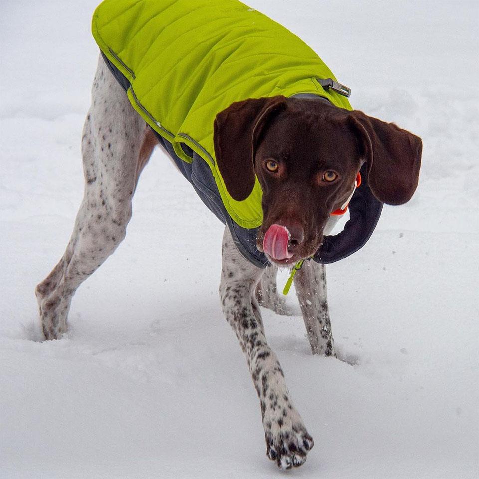 Maddi en la nieve