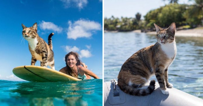 Mujer deja trabajo navega gato rescatado