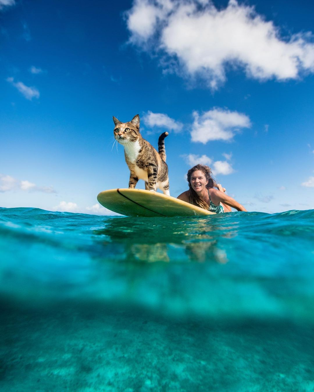 Mujer navega por todo el mundo con su gato rescatado