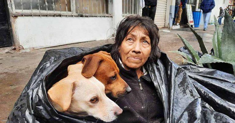 Mujer sin hogar duerme en una bolsa de basura para estar junto a sus seis perros
