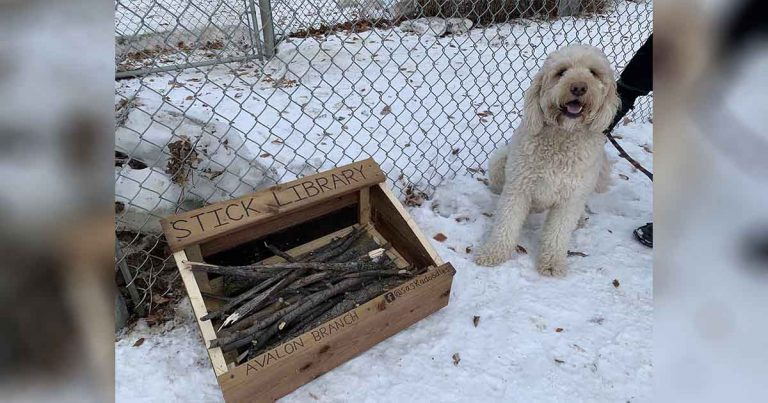 Niño de 10 años crea una 'biblioteca de palos' para perros de su localidad