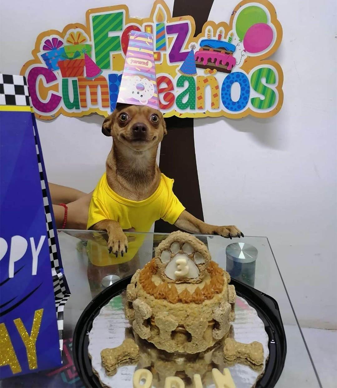 Perrito está feliz sonrisa