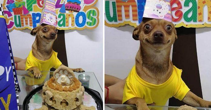 Perrito está feliz celebrar cumpleaños