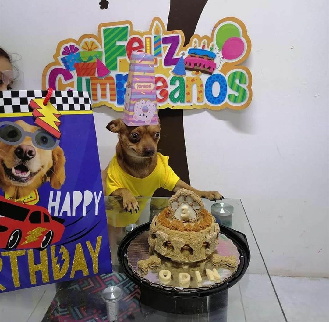 Perrito está feliz cumpleaños