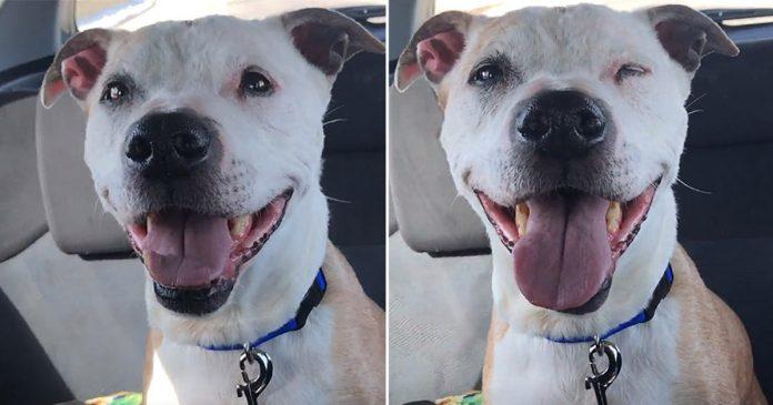 Perro rescatado 16 años no deja de sonreír