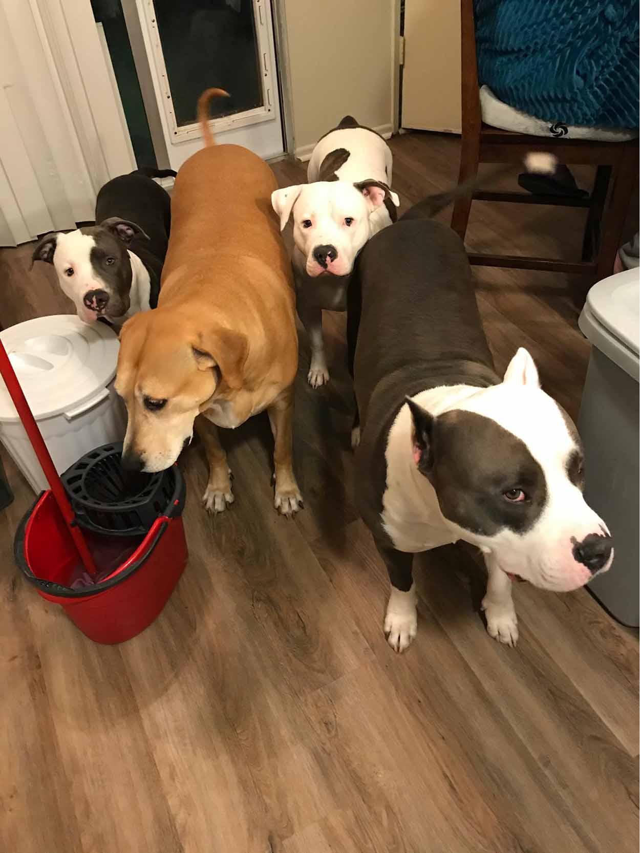 Perro travieso y sus hermanos