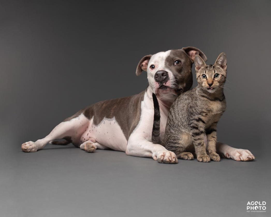 Pitbull afligido y amigo