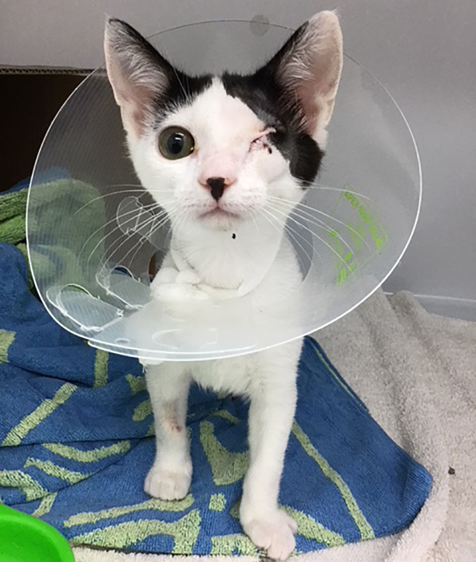 Reuben después cirugía
