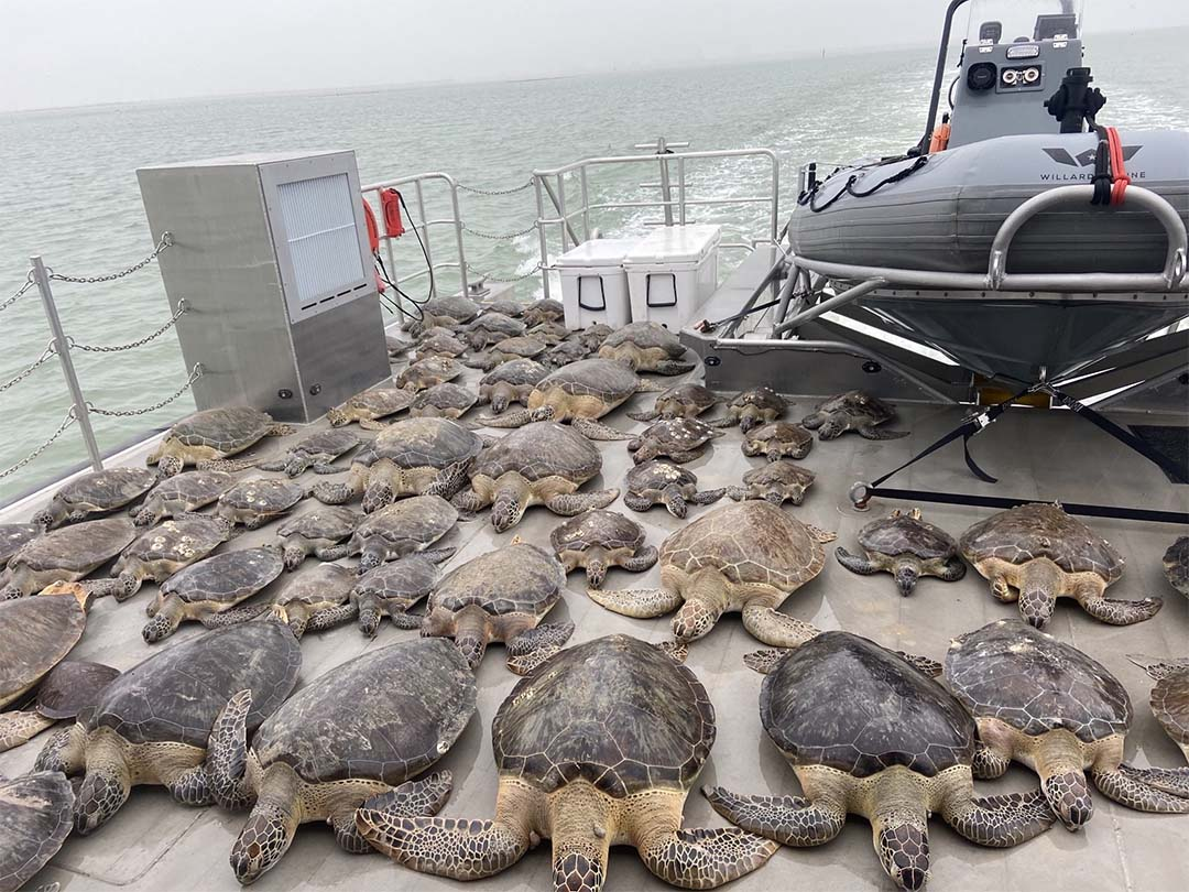 Tortugas en barco