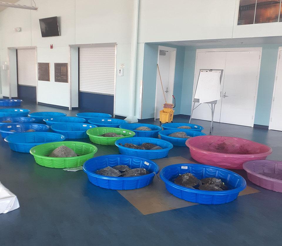 Tortugas marinas salvadas