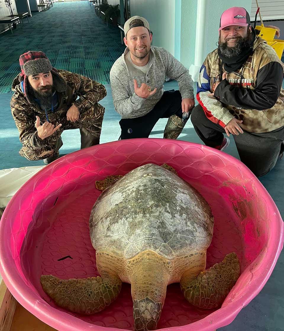 Voluntarios están salvando tortugas