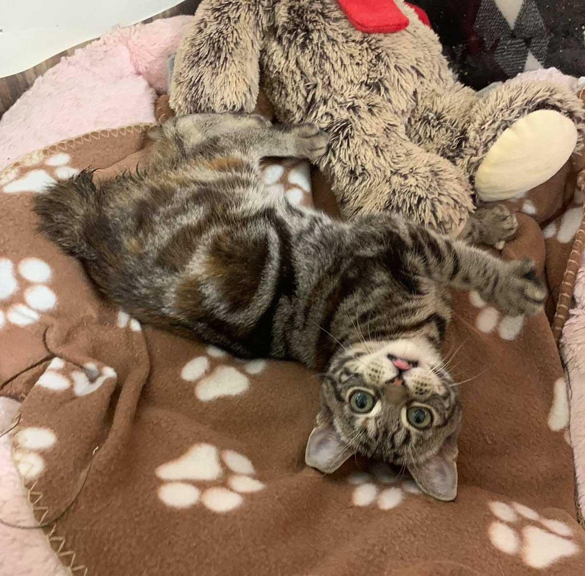Adorable gatita atigrada