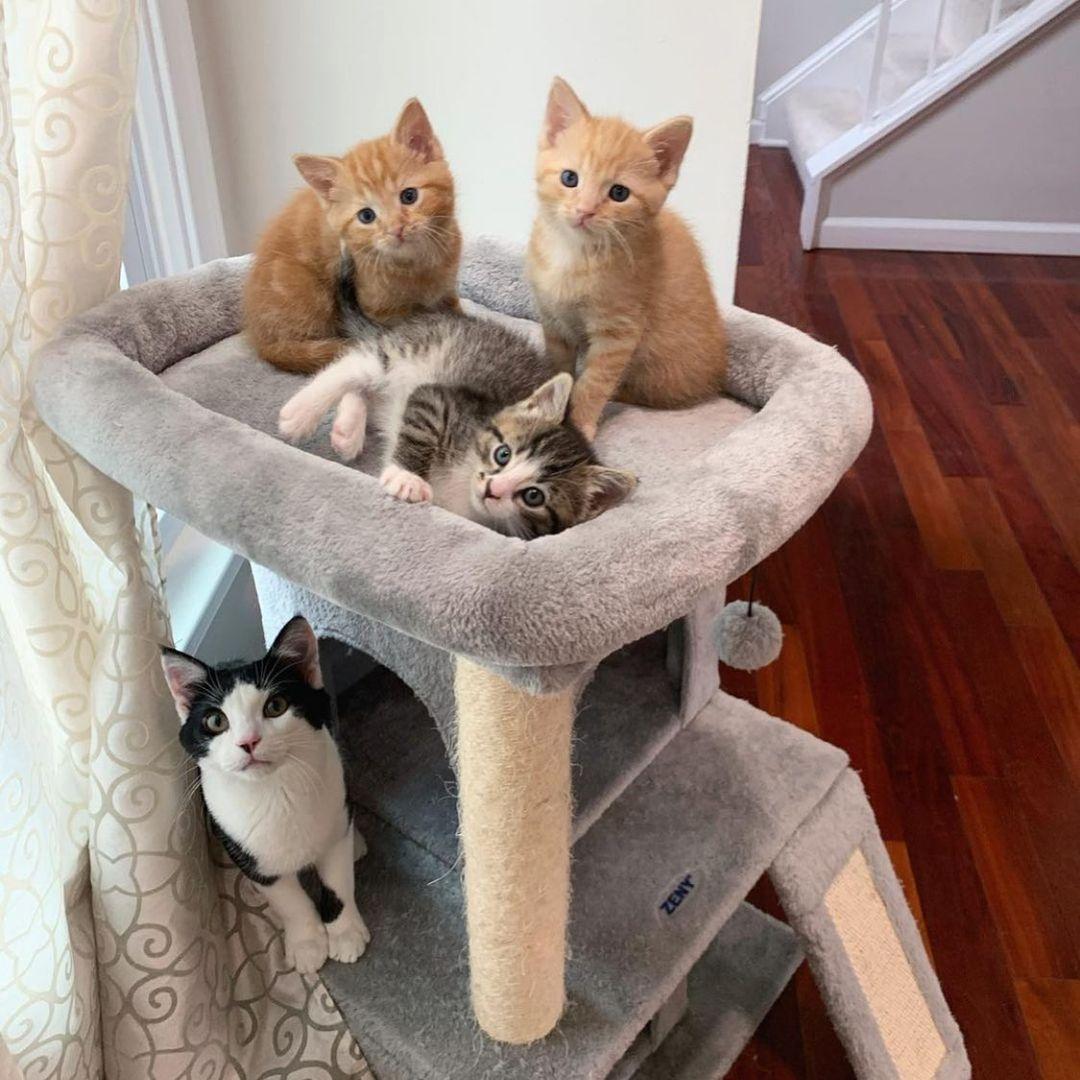 Adorables gatitos juguetones
