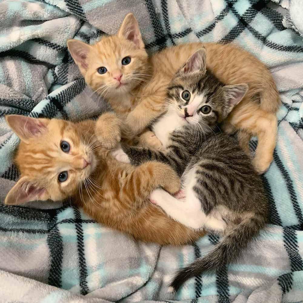 Adorables gatitos
