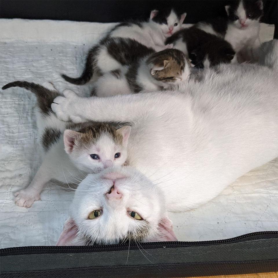 Bebés de Canasta