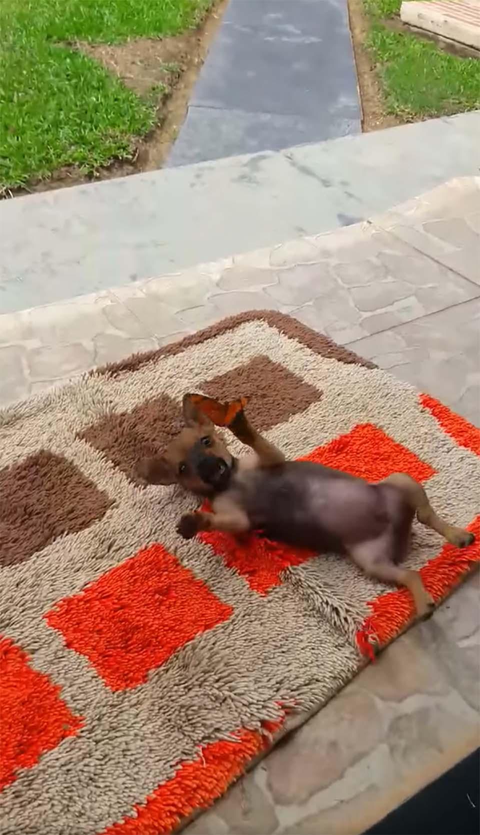 Cachorro y mariposa amigable