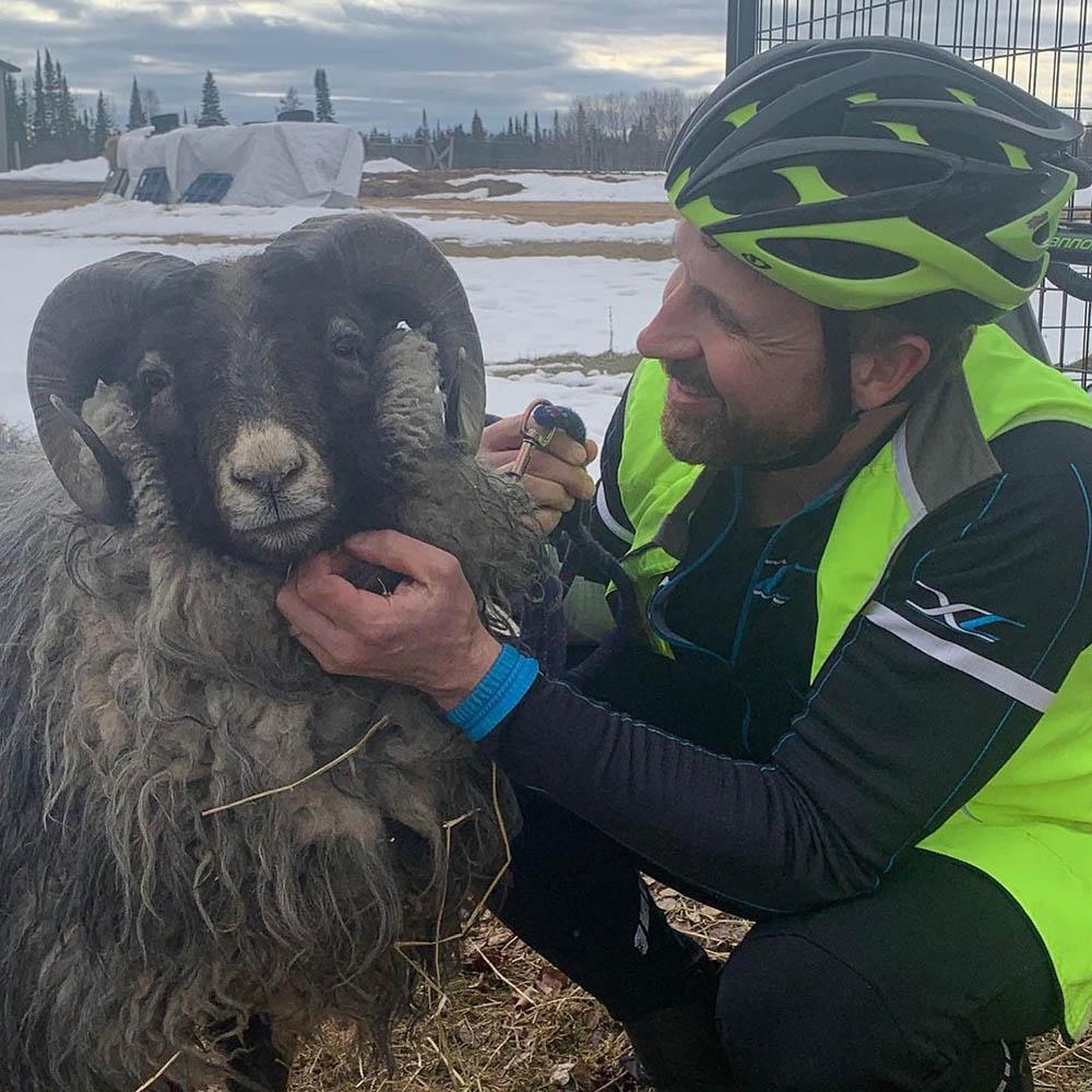 Ciclista y adorable oveja