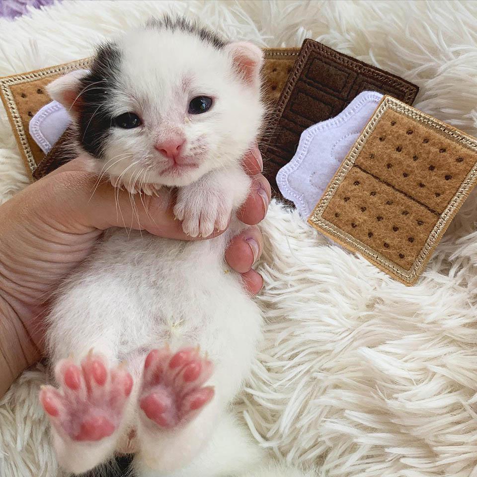 Dulce gatito rescatado
