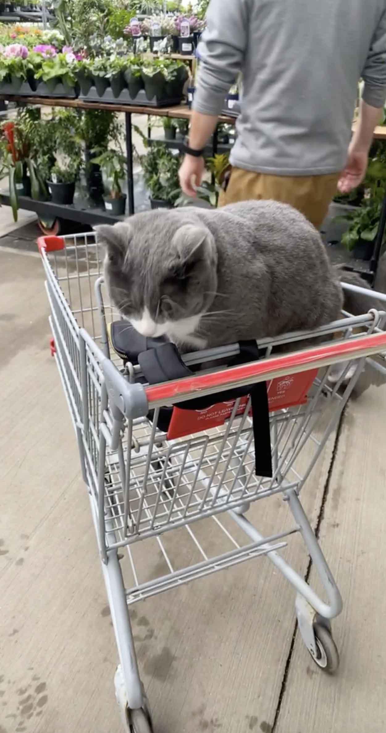 Gatito acurrucado en carrito de compras