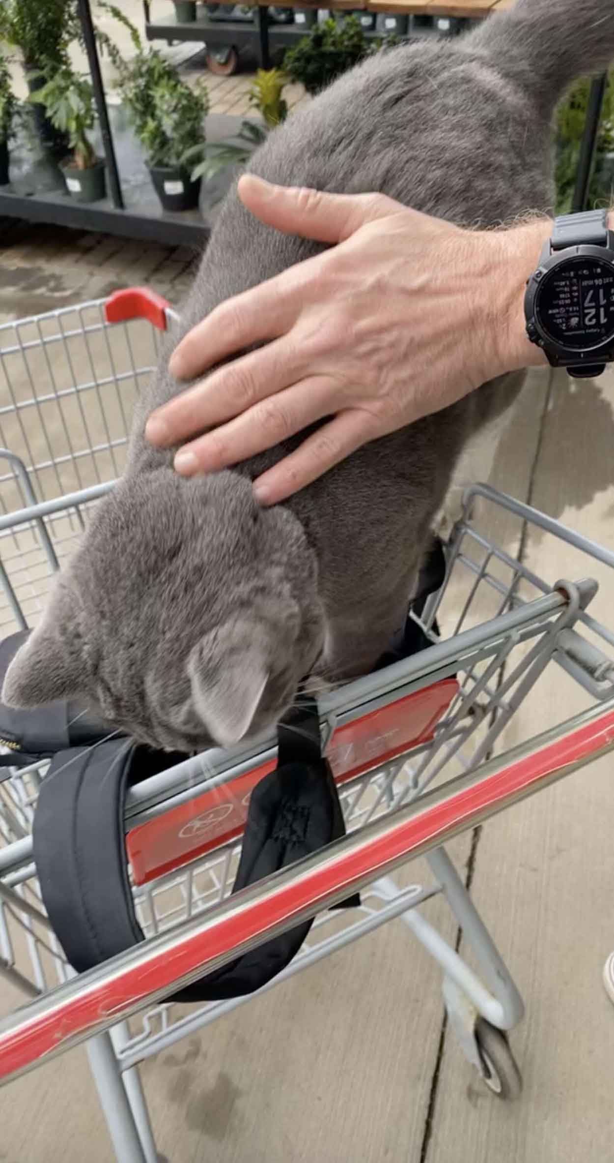 Gatito de una tienda muy consentido