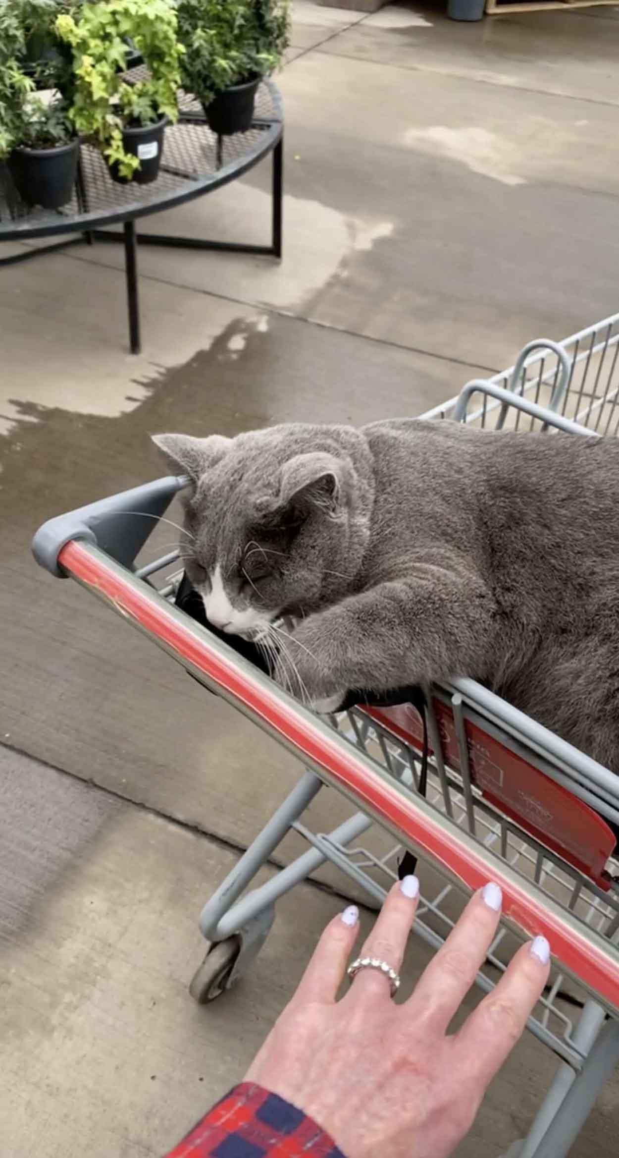Gatito esponjoso