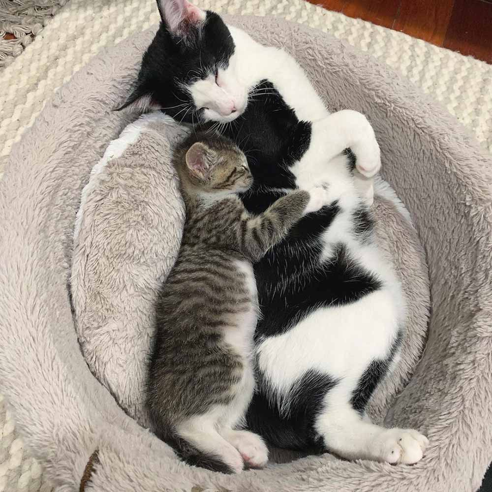 Gatito huérfano y su mejor amigo