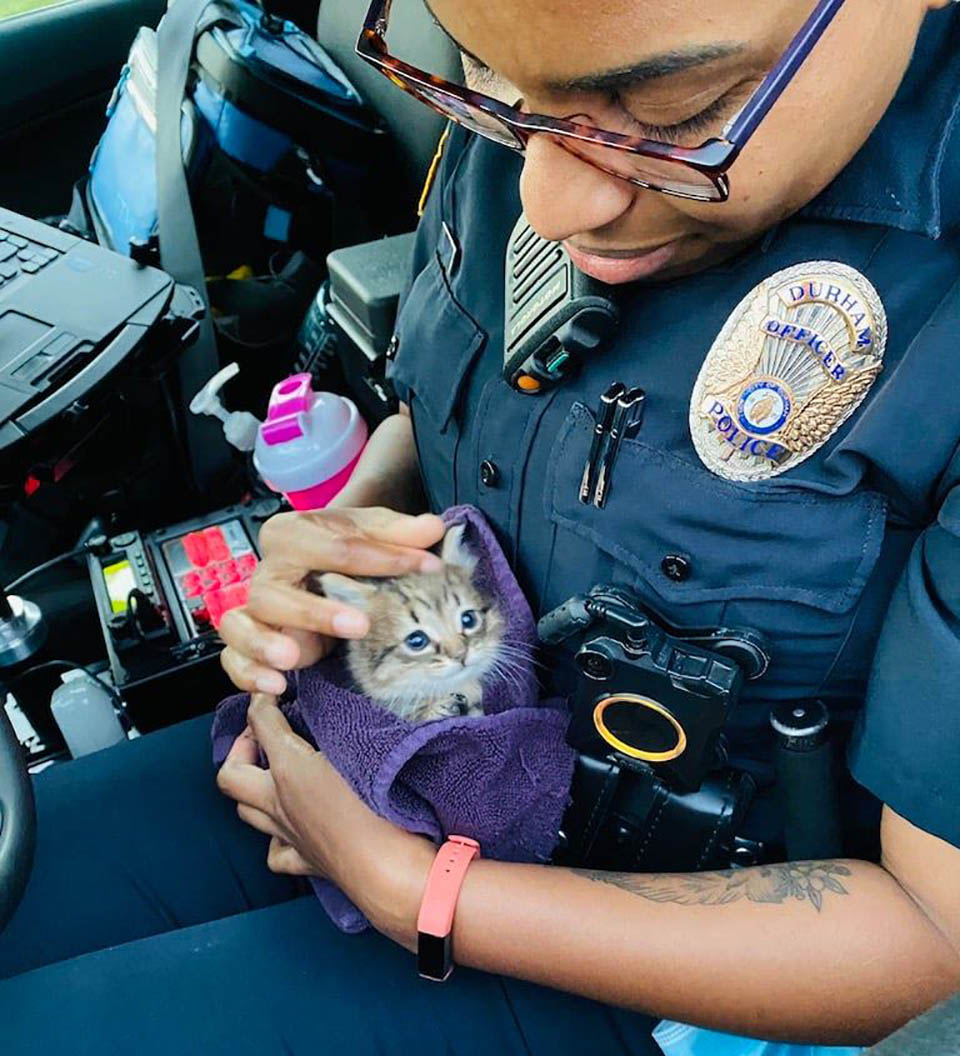 Gatito salvado por policía