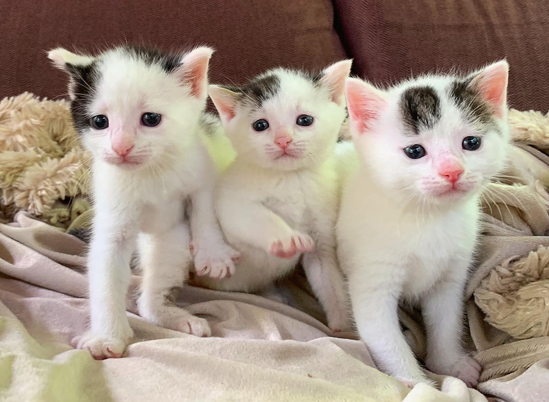 Gatitos salvados