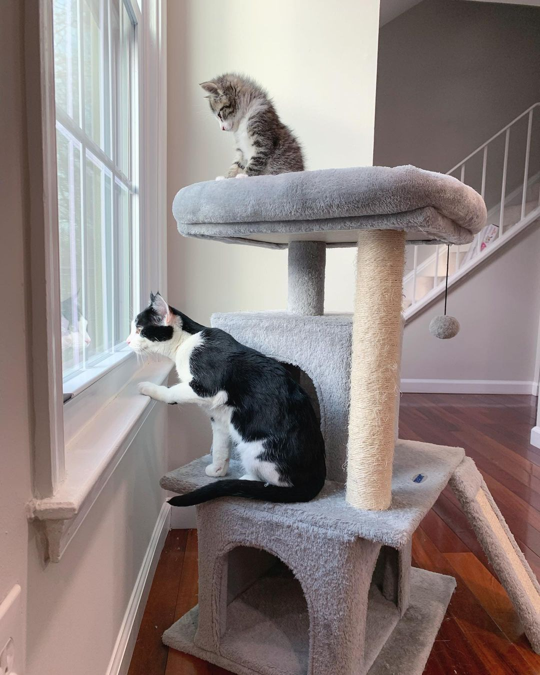 Gatitos ven por la ventana