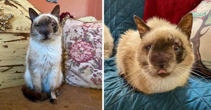 Gato con la cara más dulce está feliz de estar recuperándose después de ser abandonado