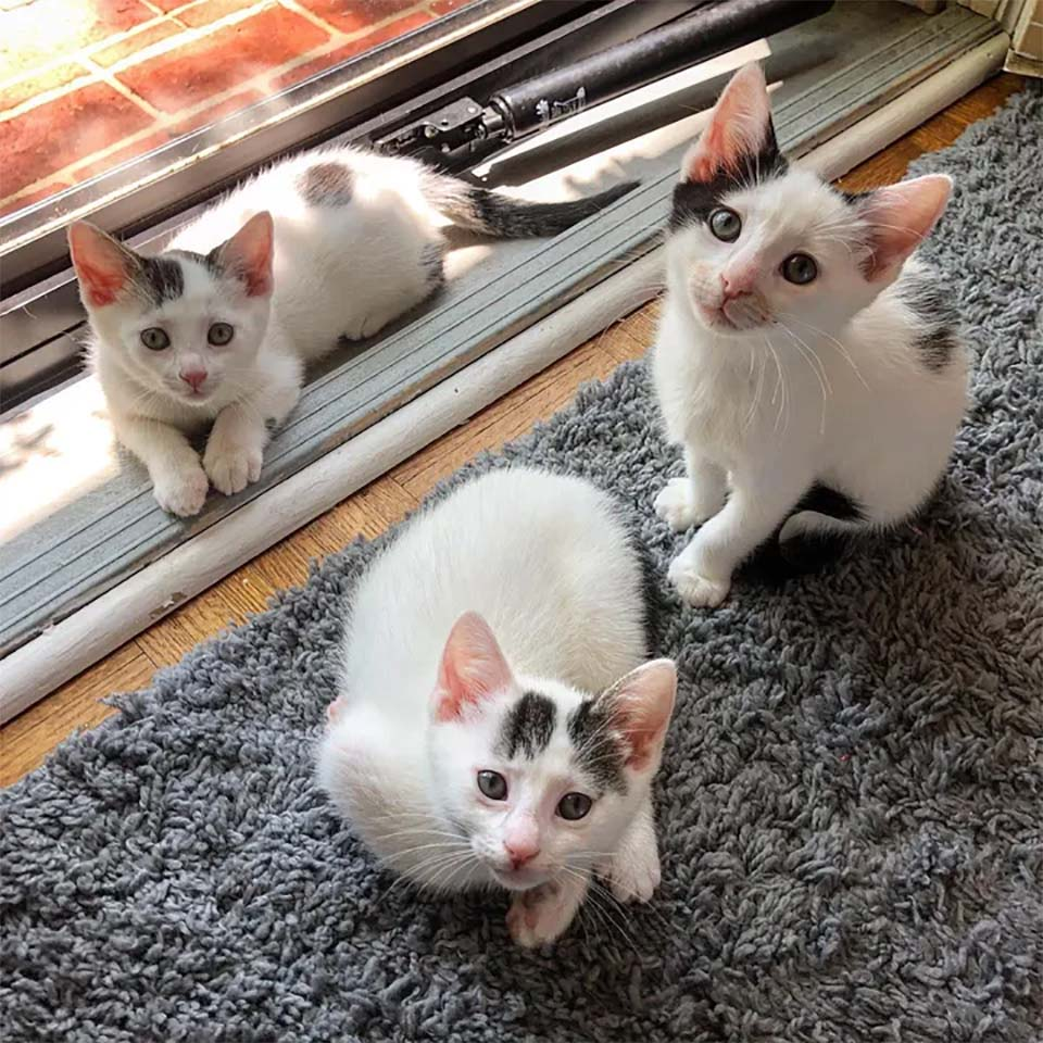 Gatos rescatados grandes