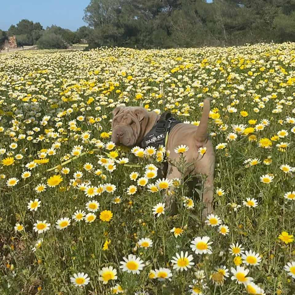 Hermoso perrito entre flores