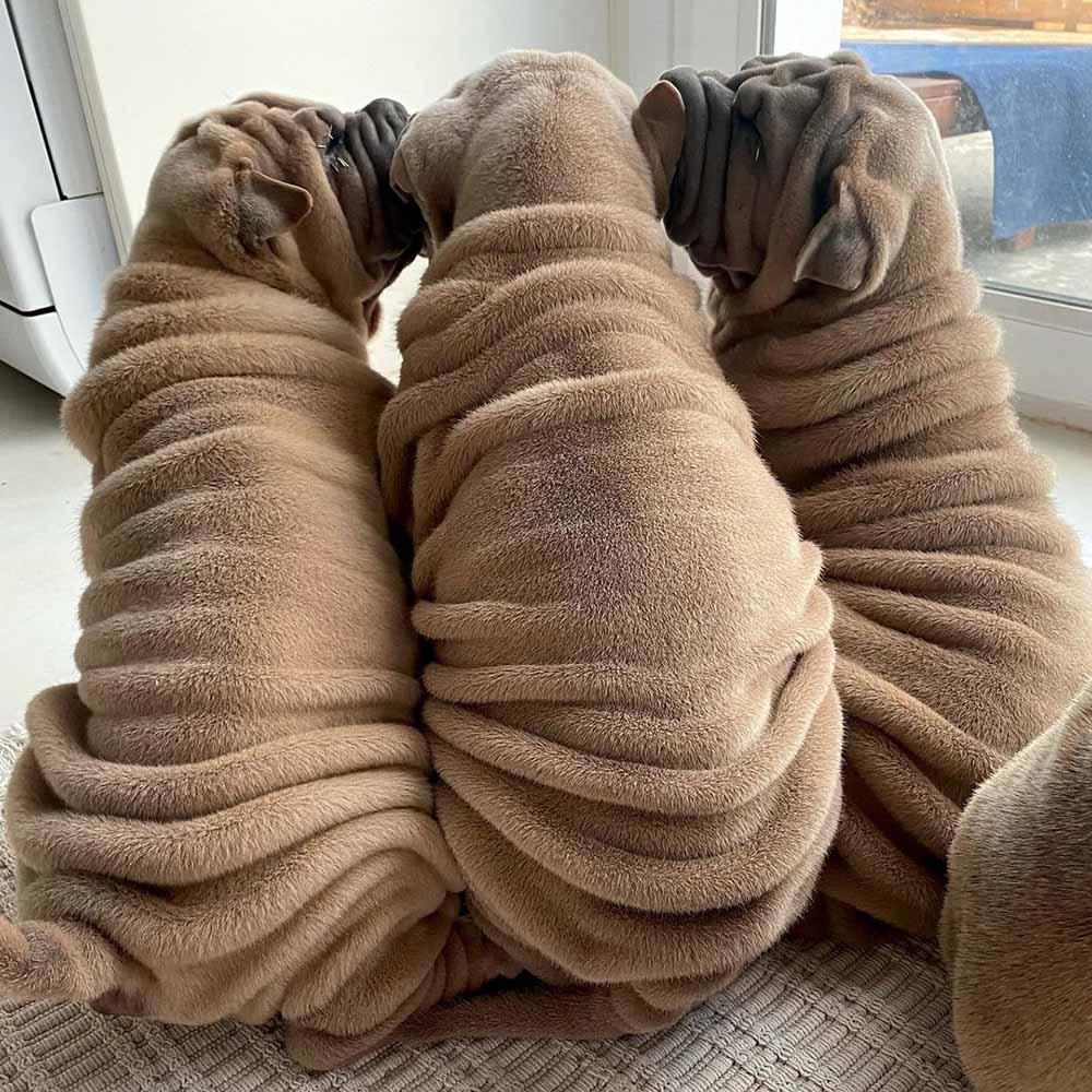 Hermosos cachorros
