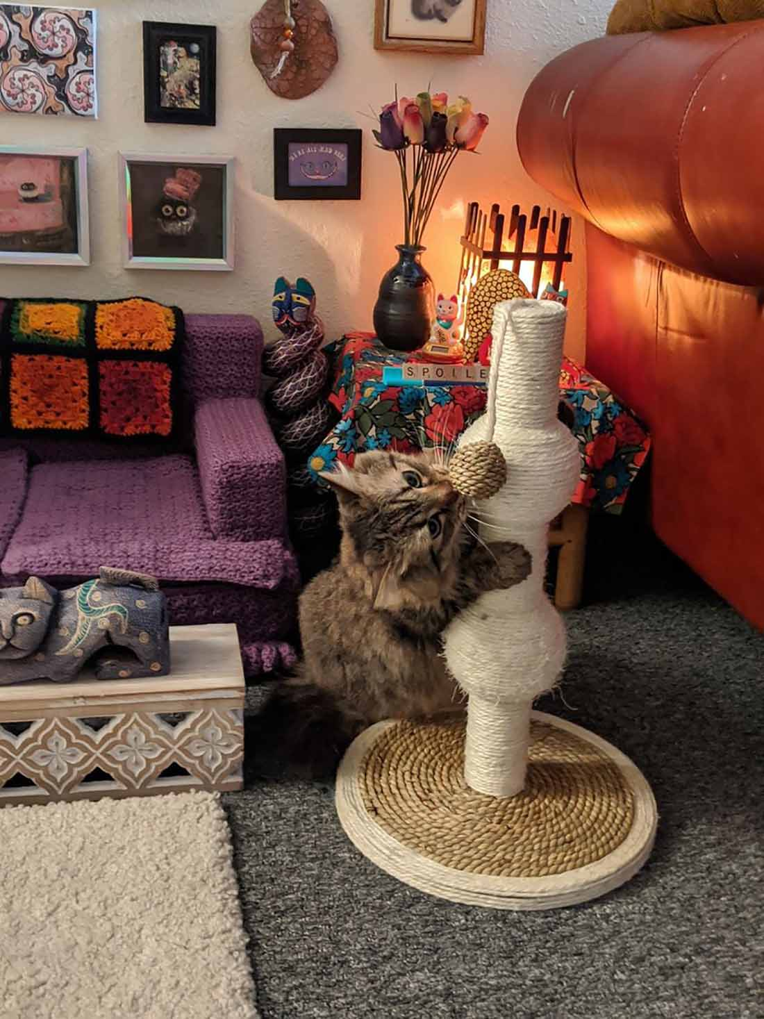 Mujer crea espacio para sus gatos