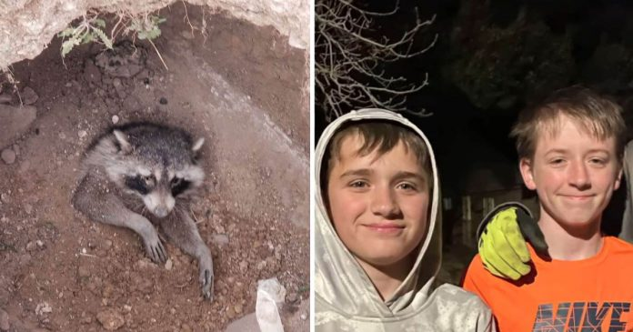 Niños bondadosos rescate mapache enterrado